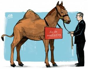 Paard met een bult